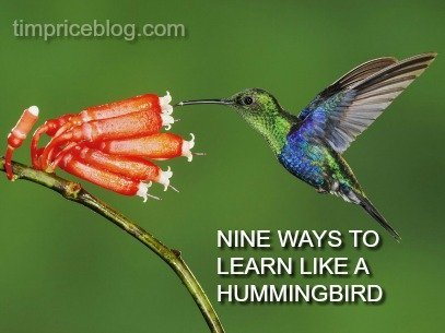 9 Ways To Learn Like A Hummingbird